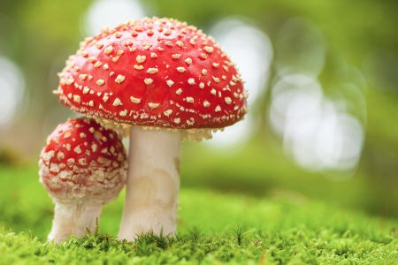 Poisonous Toadstools
